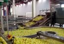 Agroalimentaire: les chefs d'entreprises prévoient de bonnes perspectives pour les mois prochains