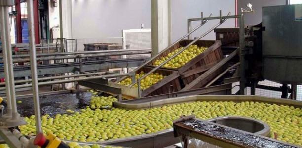 Industrie agroalimentaire : un Salon international prochainement à Oran