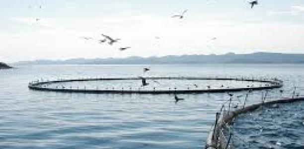Aquaculture: identification de 29 zones d'investissement à travers les wilayas côtières